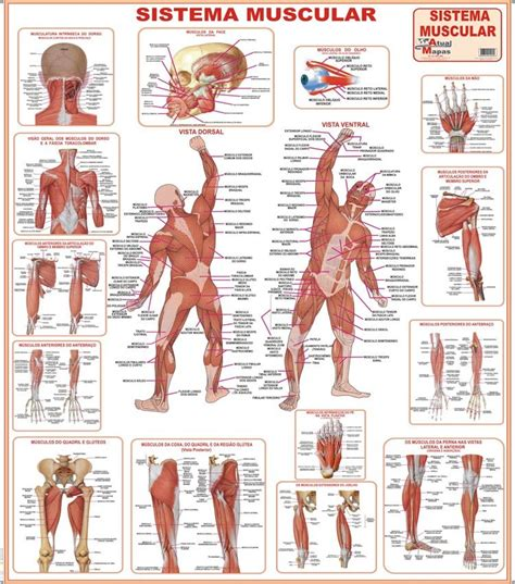 03 Mapas : Corpo Humano + Esquelético + Muscular   Sedex ...