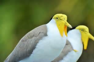 1 de cada 8 especies de aves del mundo está en peligro de ...
