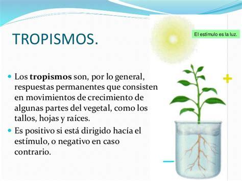 1.relacion plantas