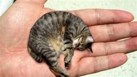 10 Animales Mas Pequeños Del Mundo   YouTube