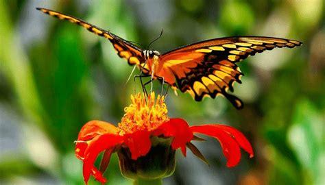 10 Características De Las Mariposas + Diferencias Entre ...