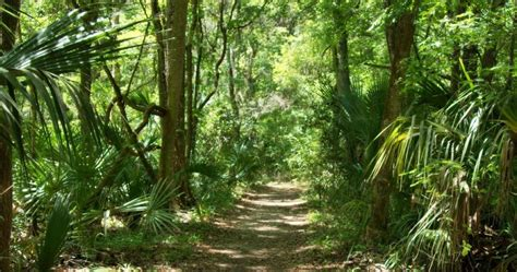 10 Características del Bosque Tropical