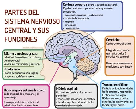10 Características del Sistema Nervioso