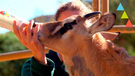10 cosas que hacen los veterinarios de fauna salvaje que ...