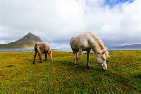10 curiosidades de los caballos (y lindas fotos)