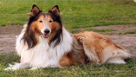 10 De los perros más famosos de la historia hasta ahora