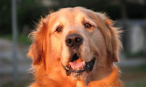 10 Famous Dogs in History