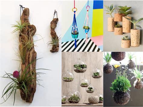10 ideas de decoración con plantas colgantes