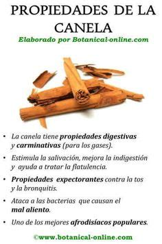 10 Increibles Propiedades y Beneficios de la Sabila | Aloe ...