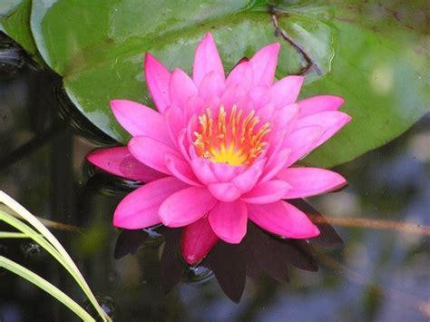 10 Mejores Plantas Acuaticas   1001 Consejos