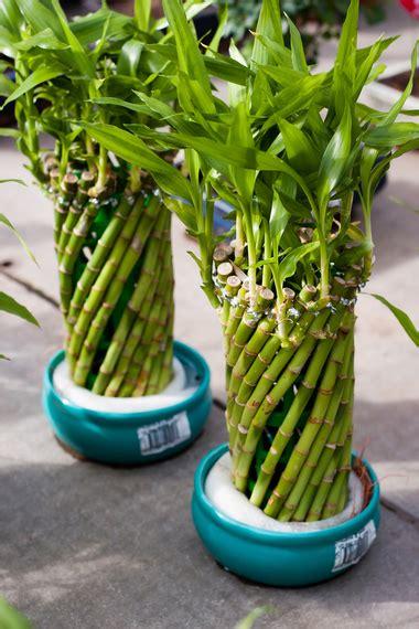 10 plantas com energias positivas segundo o Feng-Shui ...