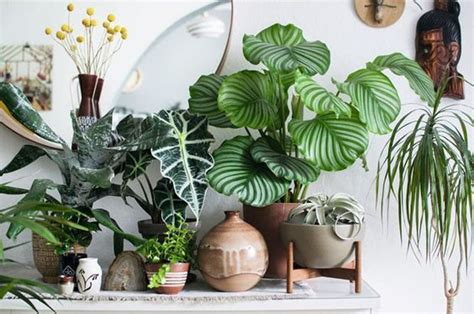 10 plantas com 'estampas' incríveis para ter em casa ...
