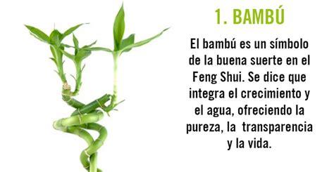 10 plantas que actúan de imán para la energía positiva