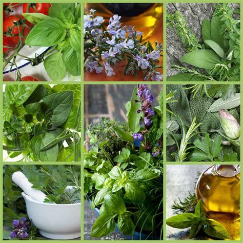 10 plantas que debes tener en casa | Familias