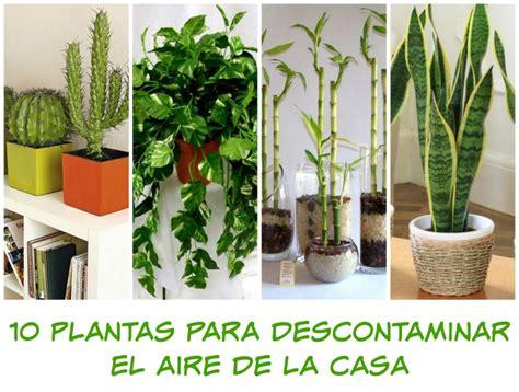 10 plantas que debes tener en tu casa - Mama XXI