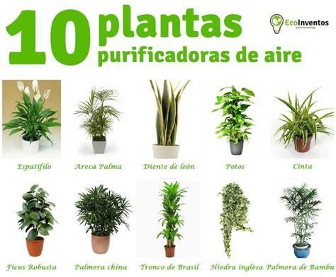 10 plantas que purifican el aire de tu casa / EcoInventos.com
