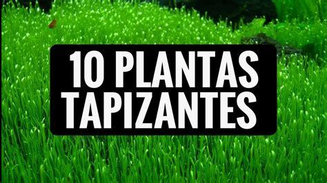 10 PLANTAS TAPIZANTES PARA EL ACUARIO DE AGUA DULCE - YouTube