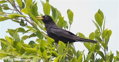 10 trucos para identificar aves por su canto y reclamo ...