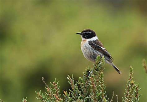 100+ [ Aves Urbanas En El Desierto ] | La Guajira ...
