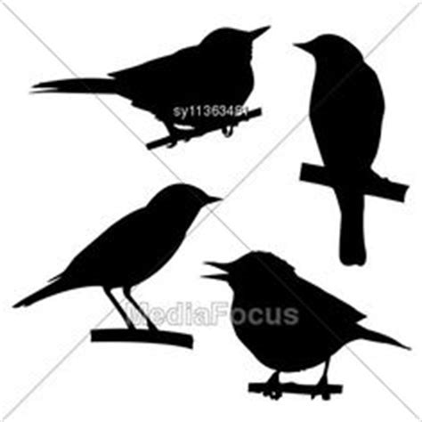 1000+ images about Birds on Pinterest   Blue jay, Bird ...
