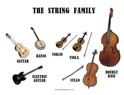 1000+ images about Different types of instruments on ...