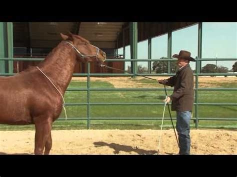 1000+ images about Horse training on Pinterest | Exercise ...