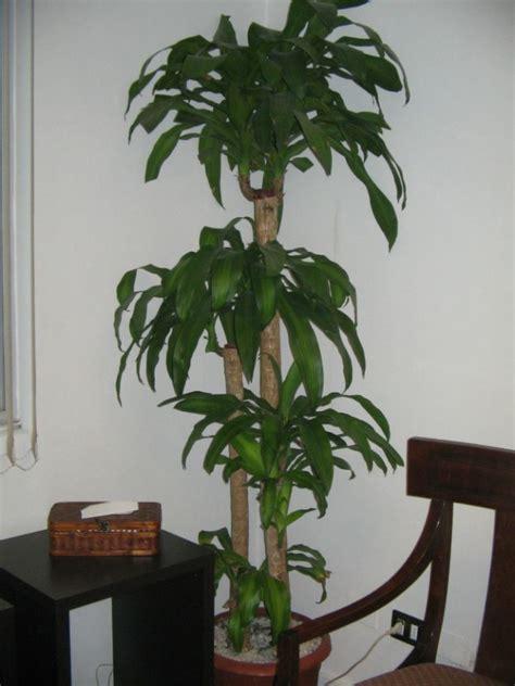1000+ images about PLANTAS DE INTERIORES -COLOMBIA on ...