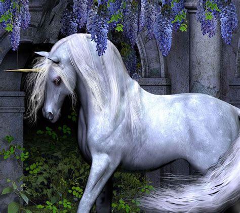 1000+ images about unicorn on Pinterest   Unicorns, Image ...