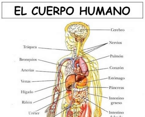 105 best images about Cuerpo humano y la salud on Pinterest