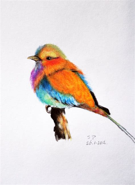107 best images about Colored Pencil   Birds on Pinterest ...