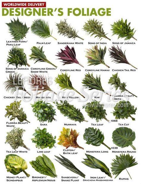 116 mejores imágenes sobre Follajes Tropicales en ...