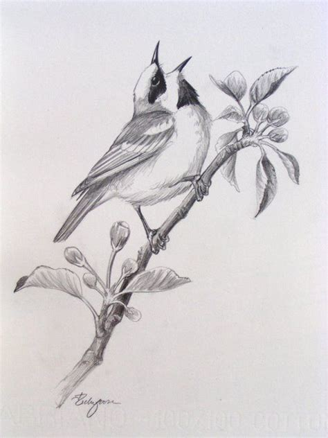 12 best images about Sketches of Birds on Pinterest ...