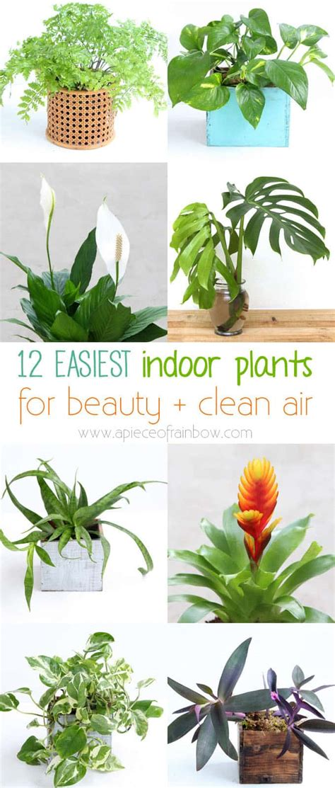 12 Easy Air Purifying Indoor Plants for Beauty + Well ...