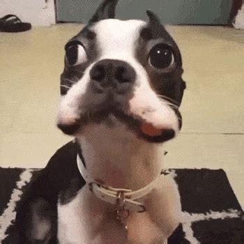 12 Gifs perros graciosos | Gifmaniacos.es