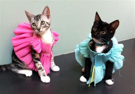 12 Purr-fect reasons to dress up your cat
