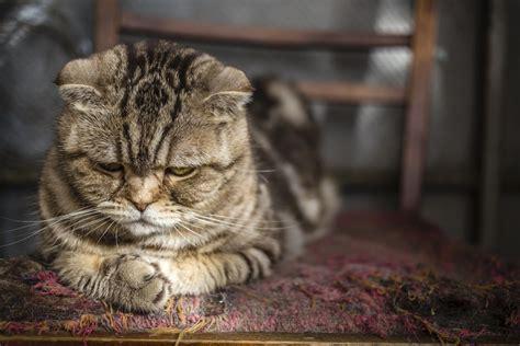 13 rascadores para gatos caseros, ¡y gratis! | EROSKI CONSUMER