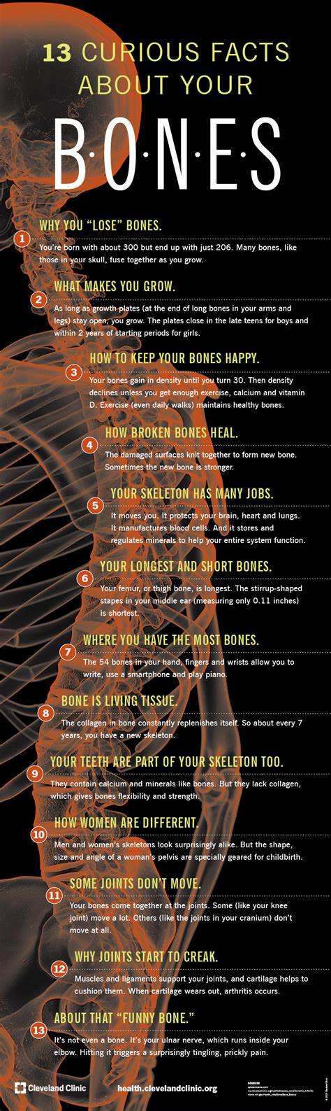 13 Strange and Interesting Facts About Your Bones – Health ...