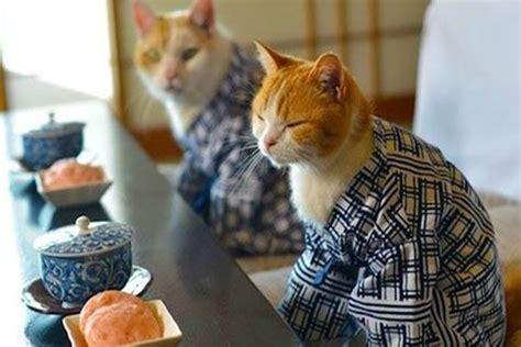 15 adorables gatos vestidos con kimonos