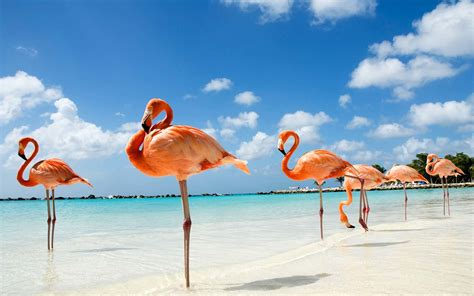 15 Caribbean Destinations That Were Made for a Romantic ...