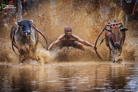 15 incredible photos from National Geographic s Nature ...