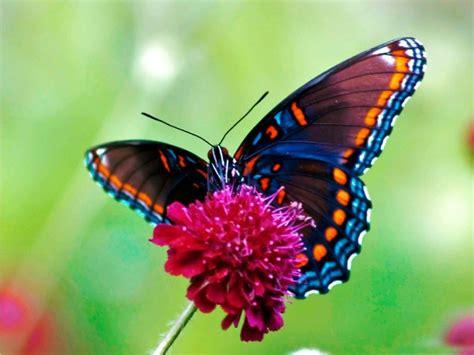 15 mariposas únicas y hermosas - Notas - La Bioguía