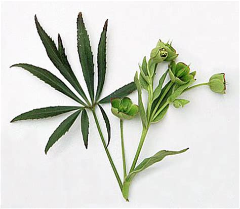 15 medicinal plants pharmaceutical ruin.