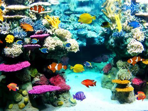 15 mejores peces para acuarios   Todo mascotas