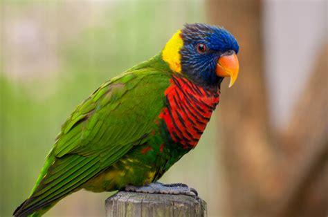 15 nombres para pájaros - Mis animales