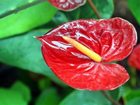 15 plantas de interior que necesitan poca luz
