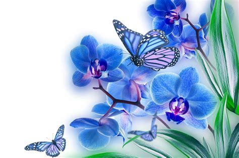 15 Spectacular Butterfly on Flower Images HD ...