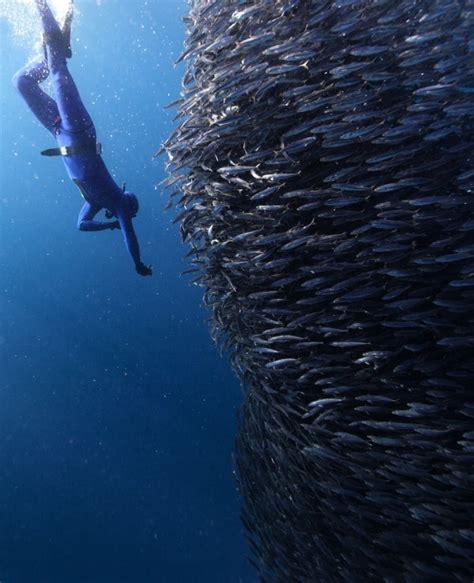 16 impresionantes fotos de animales marinos bajo el agua