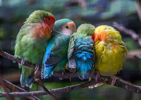 16+ Pics Of Birds Cuddling Together For Warmth Will Melt ...