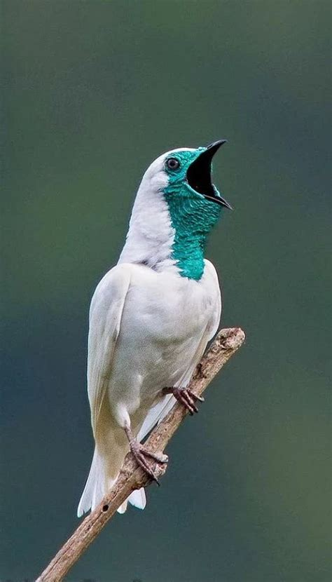 17+ best ideas about Exotic Birds on Pinterest | Pretty ...