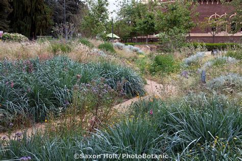 17 Best images about Great Plants for SoCal Gardens! on ...